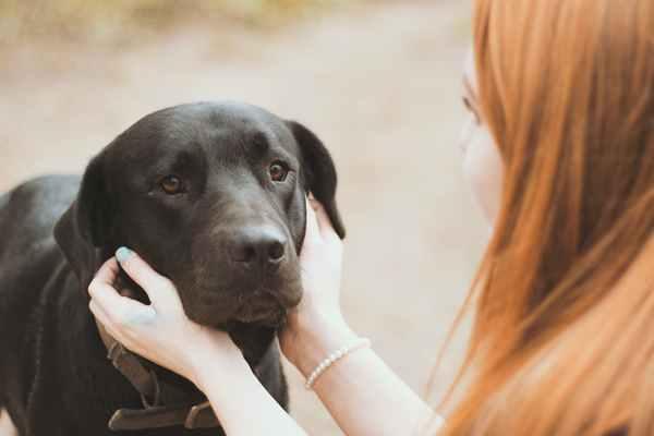 Psie problemy dermatologiczne - co robić?