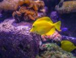 Skały i kamienie w akwarium – jak stworzyć idealną scenerię w zbiorniku?