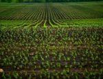 Jakich maszyn rolniczych wymaga uprawa pasowa roślin