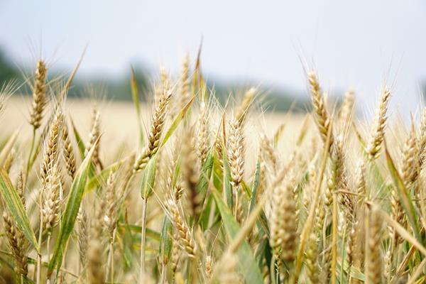 Podstawy precyzyjnego rolnictwa - co warto wiedzieć